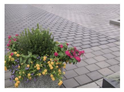 Figure 1 - Concrete pavers (Source: Queens Botanical Garden)