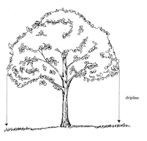 """Figure 1 – Drip line diagram (Source: Bracewell, Sara K. University of Minnesota – Sustainable Urban Landscape Information Series. """"Protecting Existing Trees During Construction."""""""