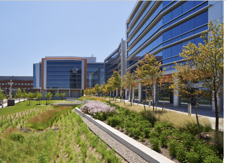 Fig 2 - Native plantings and bioswales at the Department of Chemistry and Chemical Biology Building, Rutgers University, Piscataway, NJ. (Source: Images courtesy of Rutgers University and Flad Architects).